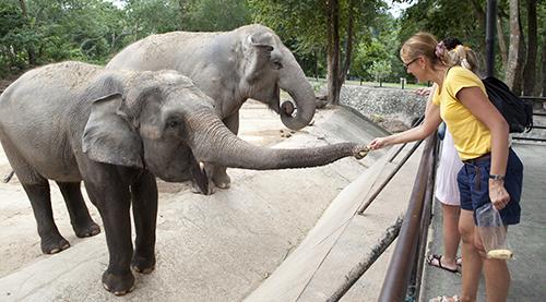 Teste De Seguranca Em Zoologicos Mostra Que Riscos Vao Alem Das Jaulas